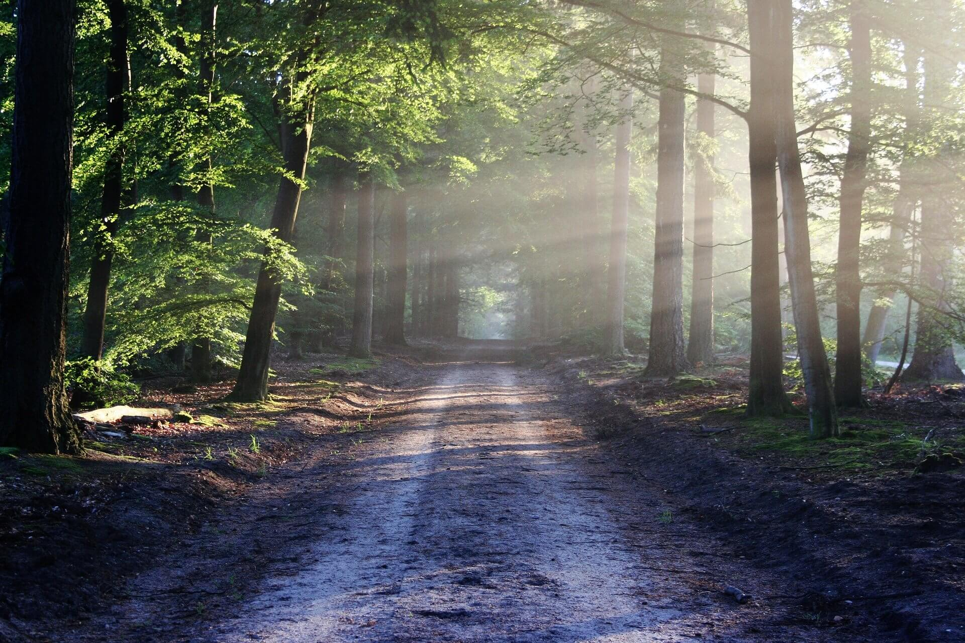A road runs through a forest, stretching off into the distance